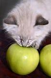 Kitten and an Apple stock photo