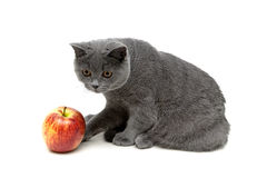 Kitten and apple isolated on a white background Royalty Free Stock Image