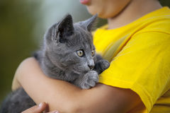 Kitten on the arm of the boy Stock Photography