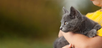 Kitten on arm of the boy outdoors, child huge his love pet Royalty Free Stock Photo