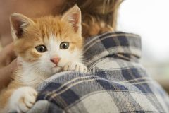 Kitten on arm of the boy outdoors, child huge his love pet. Kitten on the arm of the boy , child huge his love pet Stock Photos
