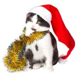 Kitten as Santa Claus Royalty Free Stock Photo