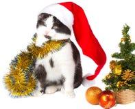 Kitten as Santa Claus and christmas tree Stock Photo