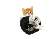 Kitten asks for money Stock Images