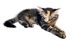 Kitten Asleep. Sleeping kitten isolatede on white background Royalty Free Stock Photography