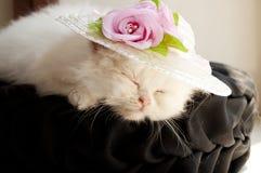 Kitten asleep Stock Image
