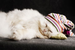 Kitten asleep Royalty Free Stock Images