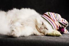 Kitten asleep Royalty Free Stock Images
