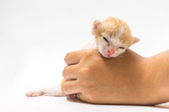 The kitten asleep in hand Stock Image