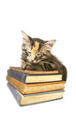 Kitten Asleep on old books. Kitten asleep on pile of old books; isolated Stock Image