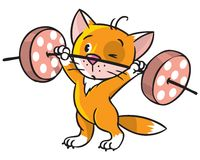 Kitten-athlete lifts the bar Royalty Free Stock Images