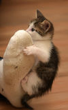 Kitten attacked the human leg Royalty Free Stock Image