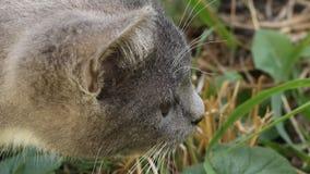 Kitten Attacks stock video footage