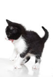 Kitten attacks Royalty Free Stock Photos
