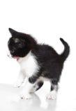 Kitten attacks. On white background isolated royalty free stock photos
