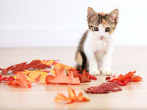 Kitten in autumn leaves Royalty Free Stock Images