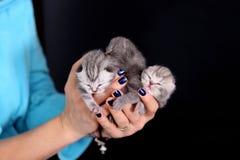 Kitten babies Royalty Free Stock Photos