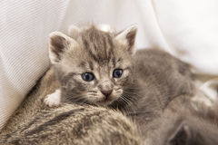 Kitten babies. A heap of cat is cuddly babies on their mother Stock Photo