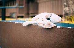 Clumsy cat playing near the train royalty free stock photo
