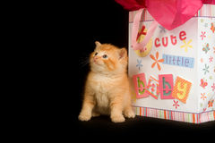 Kitten and baby gift bag Royalty Free Stock Photography