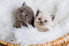 Kitten babys cat animal Stock Images