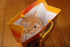 Kitten in bag Royalty Free Stock Image