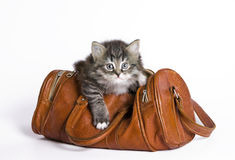 Kitten in a bag. One kitten sits in an old leather bag stock photos