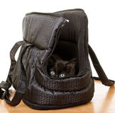 Kitten in a bag. Royalty Free Stock Image