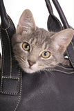 Kitten in bag Royalty Free Stock Photo