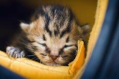 Kitten in the bag Stock Image