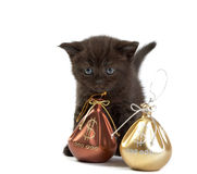 Kitten and a bag with money Stock Photo