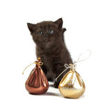 Kitten and a bag with money. The Kitten and a bag with money stock image