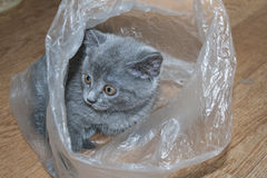 Kitten in a bag Royalty Free Stock Images