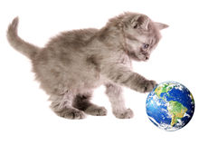 Kitten with ball. The small, beautiful, fluffy, grey kitten, touch paws globe, on a white background, close-up Royalty Free Stock Photos