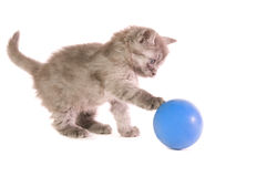Kitten with ball. The small grey kitten plays with a  blue ball on white background Stock Photo