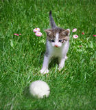Kitten and ball Stock Photography