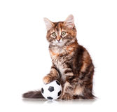 Kitten with ball Stock Photo