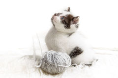 Kitten and a ball of hank royalty free stock image
