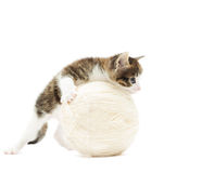 Kitten and ball of thread Royalty Free Stock Photo