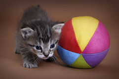 Kitten and ball Royalty Free Stock Image
