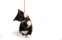 Kitten with a ball of wool Stock Images