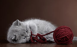 Kitten and ball of yarn Stock Photo