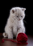 Kitten and ball of yarn Stock Images