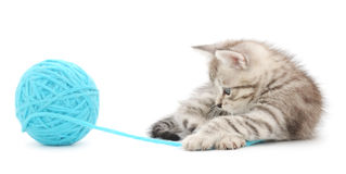 Kitten with ball of yarn Royalty Free Stock Photography