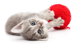 Kitten with ball of yarn. Royalty Free Stock Photos