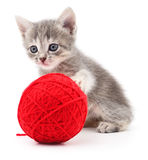Kitten with ball of yarn. Stock Image