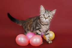 Kitten with balloons Stock Photography