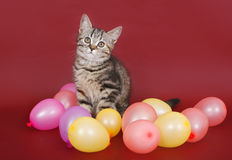Kitten with balloons Stock Photos