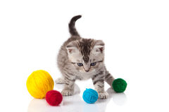 Kitten with balls of threads. Stock Image