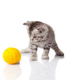 Kitten with balls of threads. Royalty Free Stock Image